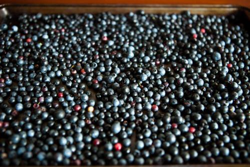 blueberry abundance