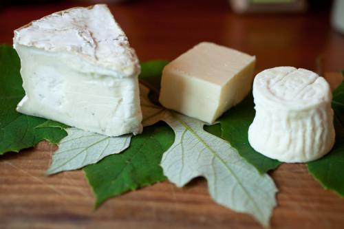 grape leaves w:cheese