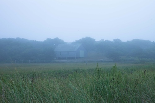 5 fog at katama salt marsh